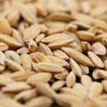 Vận chuyển hạt giống nông sản chuyên nghiệp. Đảm bảo an toàn 100%